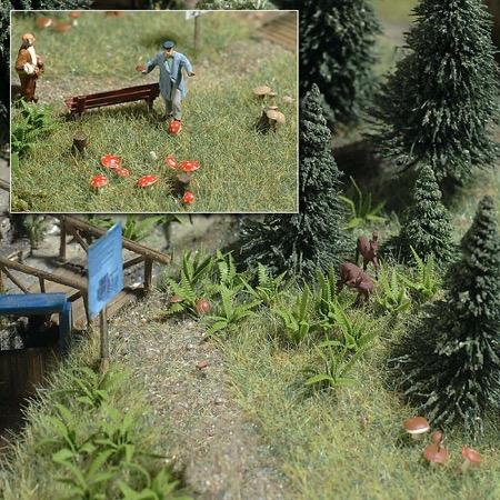 Bregner og svampe