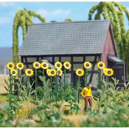 Riesen-Sonnenblumen H0