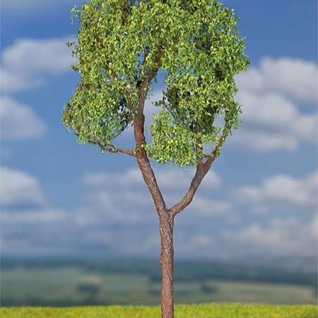 Eukalyptustræ