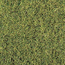 realistic wild grass savannah / 28 x