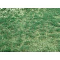 realistic wild grass marshy county / 45