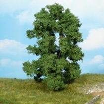 ash tree 15 cm