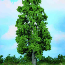 chestnut tree 30 cm