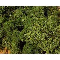 lichen medium green 30 g