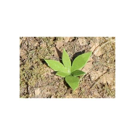 Landskabs planter