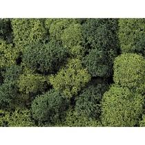 Lichen, green mix, assorted