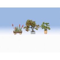 Ornamental Plants in Tubs