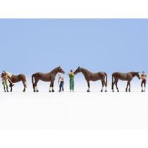 Heste pasning