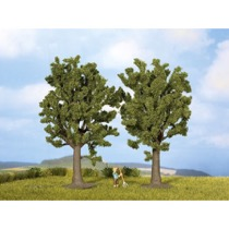 Beech Trees, 2 pieces, 13 cm