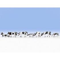Køer, Sortbrogede