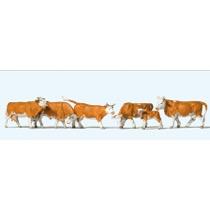 Køer - Brunplettet