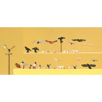 Duer, Måger, Krager og Rovfugle