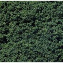 Foliage clusters, dark green